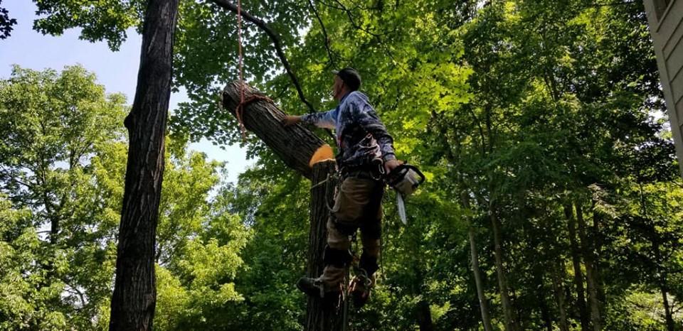 Indianapolis Tree Service 317-348-0811