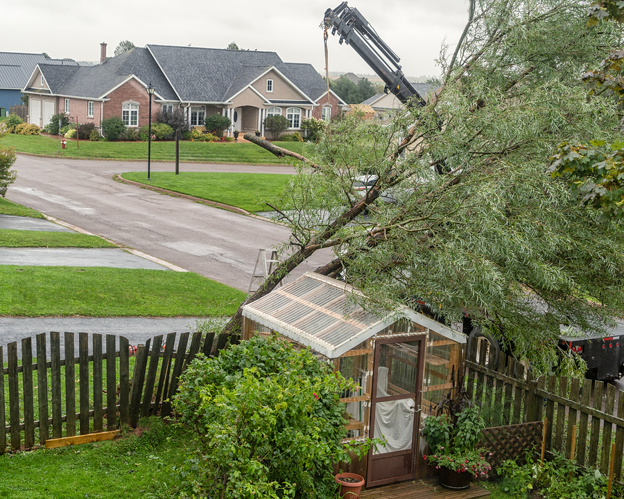 Indianapolis Tree Removal Service 317-348-0811