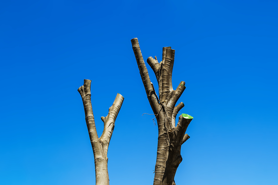 Indianapolis Tree Services 317-348-0811