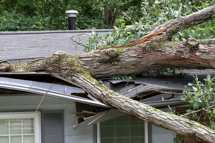 Indianapolis Storm Damage Tree Services 317-348-0811
