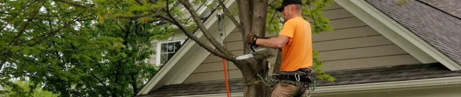 Timberland Tree Care Indianapolis, Indiana 317-348-0811
