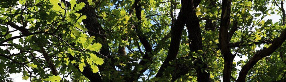 Timberland Tree Care